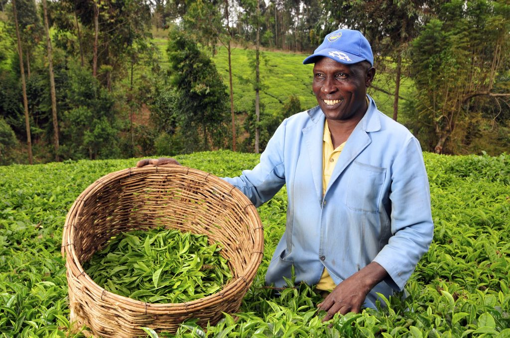 Agnes Kalibata: Fixing the world's food systems is a problem we must solve together