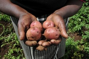 AGRF targets urban food supply boost amid Covid-19 disruption