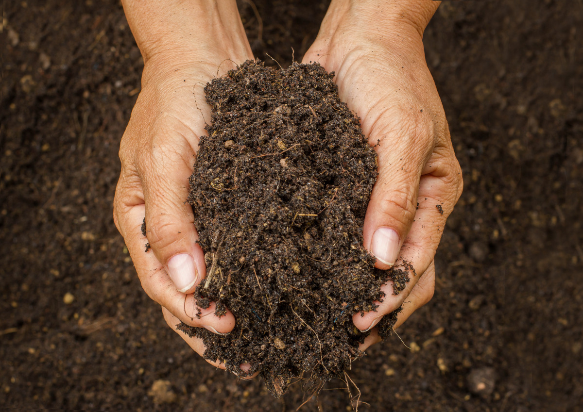 Hands holding soil.
