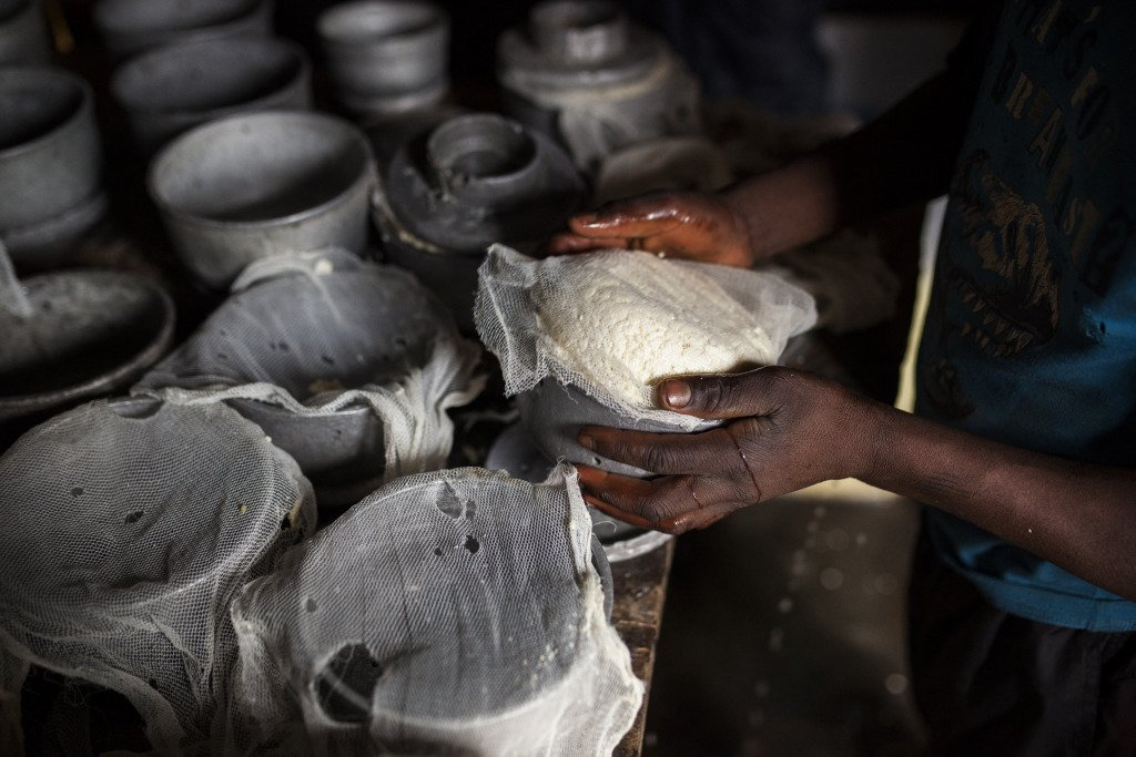 An African worker moulds fresh cheese.