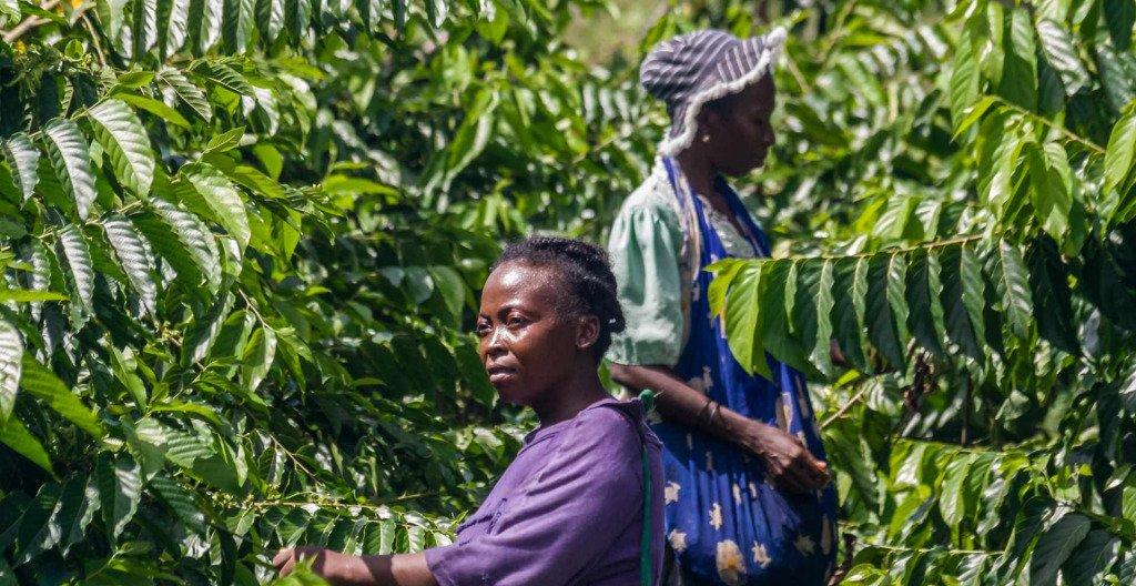 African agricultural workers.
